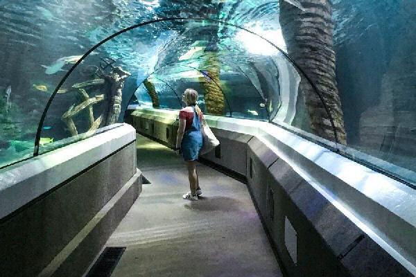 a female walking through the underwater ocean tunnel at Sea Life Sunshine Coast